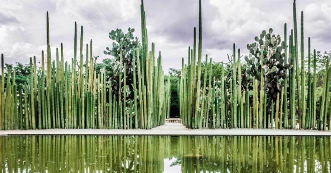 Ethnobotanical-Garden
